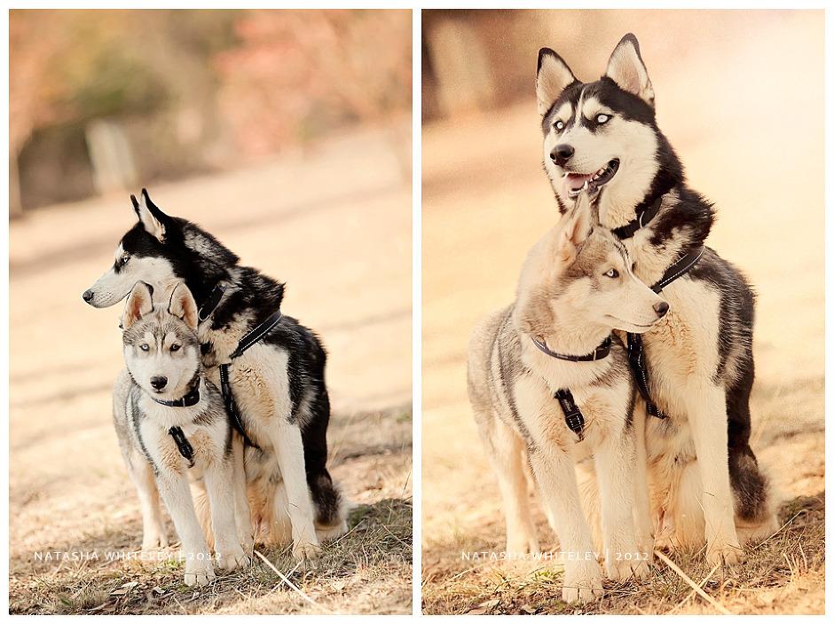 Pretoria Pet Photographer